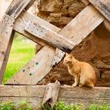 felino en cara del dulce de Marruecos África foto de archivo