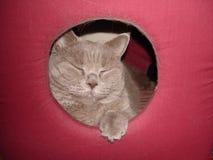Felino mullido lindo, domesticado por el hombre foto de archivo libre de regalías