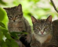 Felis catus, Katze mit einem Vogel in Zähne. Stockfotos