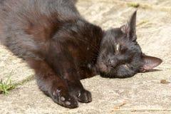 Feliscatus - korte haired kat in tuin royalty-vrije stock foto's