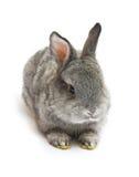 Feliz Año Nuevo del conejo Fotos de archivo