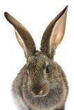 Feliz Año Nuevo del conejo Foto de archivo libre de regalías