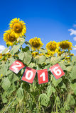 Feliz Año Nuevo 2016 en campo del girasol Imagenes de archivo
