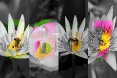 Feliz Año Nuevo 2017 en Lotus Flower Theme Fotografía de archivo libre de regalías