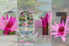 Feliz Año Nuevo 2017 en Lotus Flower Theme Foto de archivo