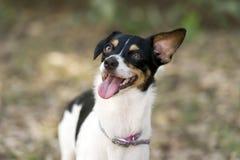 Feliz del perro y divertido locos foto de archivo libre de regalías