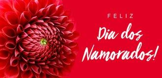 Feliz Dia dos Namorados! tekst w portugalczyku: Szczęśliwy Valentine's dzień! i jaskrawego czerwonego dalia kwiatu sztandaru gr Obrazy Royalty Free