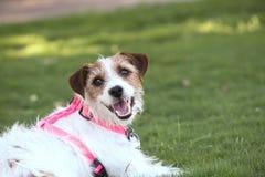 Feliz en el parque del perro Imagen de archivo