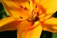 Feliz en el Sun Fotos de archivo
