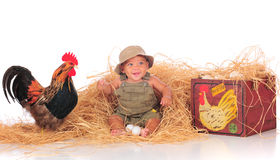 Feliz entre los pollos Imagen de archivo libre de regalías