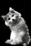 Feliz gato Fotografía de archivo libre de regalías
