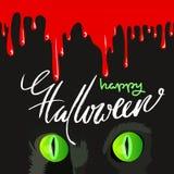 Feliz Halloween Cat Cute Vector Design negra Gotas de sangre del vector Imagen de archivo libre de regalías