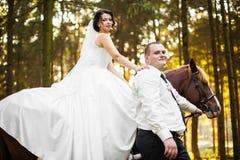 Feliz magnífico elegante romántico apacible por completo de los pares del amor con el caballo Imagen de archivo libre de regalías