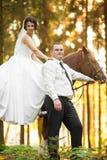 Feliz magnífico elegante romántico apacible por completo de los pares del amor con el caballo Fotografía de archivo