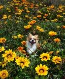 Feliz nas flores Foto de Stock Royalty Free