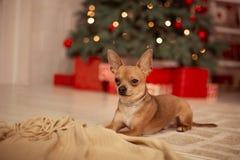 Feliz Natal, ano novo Foto de Stock