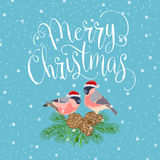 Feliz Natal com pássaro Imagens de Stock