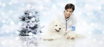 Feliz Natal de veterinária, clínica do veterinário com o veterinário imagens de stock royalty free
