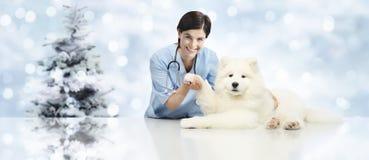 Feliz Natal de veterinária, clínica do veterinário com o veterinário imagem de stock