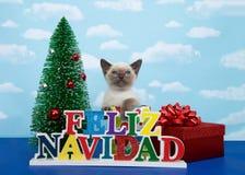 Feliz Navidad española del gatito siamés Imágenes de archivo libres de regalías