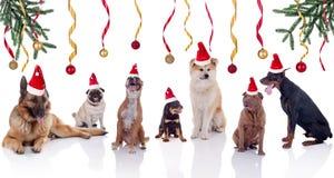Feliz Navidad y concepto feliz del año de las noticias de los perros Imagen de archivo libre de regalías