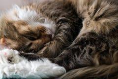 Feliz y gato que duermen en la parte posterior fotos de archivo