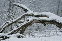 Fell a tree Royalty Free Stock Photography