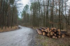 Felled bomen door de weg in het bos royalty-vrije stock fotografie