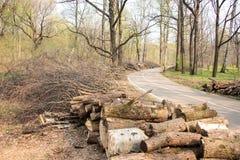 Felled bomen en struiken aan de kant van de weg royalty-vrije stock foto's