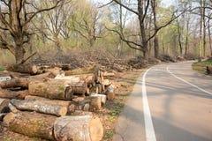 Felled bomen en struiken aan de kant van de weg royalty-vrije stock afbeeldingen