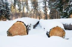 Felled bomen, klaar vervoer aan de zaagmolen worden gestapeld die royalty-vrije stock foto's