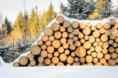Felled bomen, klaar vervoer aan de zaagmolen worden gestapeld die royalty-vrije stock afbeelding