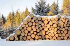 Felled bomen, klaar vervoer aan de zaagmolen worden gestapeld die stock foto