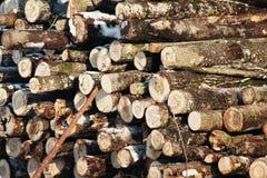 Felled bomen liggen in een heuvel op een Zonnige de winterdag spaties voor creativiteit, houten producten of brandhout Brandstof  royalty-vrije stock fotografie