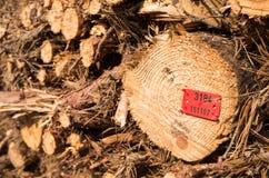 Felled boomboomstammen Stock Afbeeldingen