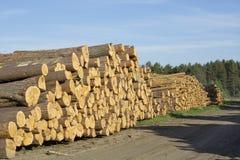 Felled boomboomstammen Royalty-vrije Stock Afbeeldingen