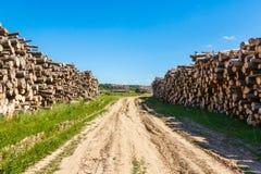 Felled boomboomstammen van landbouwweg aan beide kanten worden opgestapeld die Royalty-vrije Stock Afbeeldingen