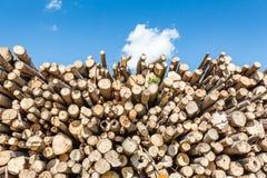 Felled boomboomstammen van landbouwweg aan beide kanten worden opgestapeld die Royalty-vrije Stock Foto