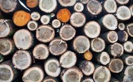 Felled boomboomstammen voor verkoop worden gestapeld die Royalty-vrije Stock Afbeeldingen
