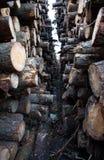 Felled boomstammen Stock Foto