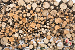Felled de Industrie Abstracte Achtergrond van het Bomenhout Royalty-vrije Stock Foto