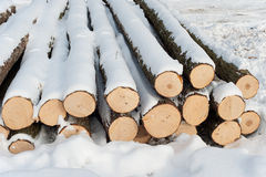 Felled forest Stock Photo