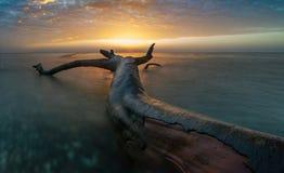 Felled giant. Poland,sunset over the beach ,Baltic sea Stock Image
