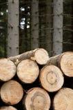 Felled hout Royalty-vrije Stock Afbeelding