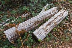 Felled Logboeken Stock Foto's