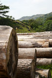 Felled Logs. Located in the Lake District national Park, Cumbria, England royalty free stock photo