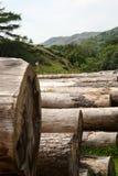 felled logs Στοκ φωτογραφία με δικαίωμα ελεύθερης χρήσης