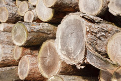 Felled logs. Close up of chopped wood logs stacked in a pile Royalty Free Stock Photo