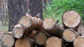 Felled Logs Falling on a Tree Trunks in the Forest. Folding logs felled into a heap. The felled trees fall on a pile of firewood. Cut logs are stacked in a stock video