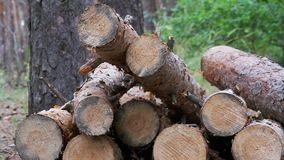 Felled Logs Falling on a Tree Trunks in the Forest. Folding logs felled into a heap. The felled trees fall on a pile of firewood. Cut logs are stacked in a stock video footage